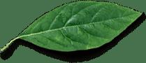 separator liść